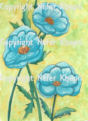 3 Blue Anenome Flowers 2018 PUB